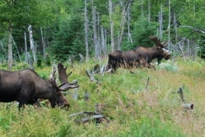 Experience the wildlife in Newfoundland